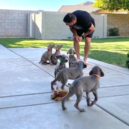 www.barrettweimaraners.com_2021-01-14_Mattie-Puppies_02