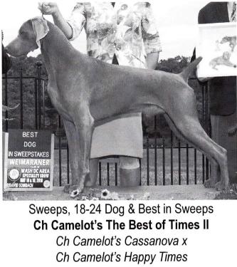 www.barrettweimaraners.com_Camelot's The Best of Times II JETHRO – WCA Best in 18-24 Swps 07