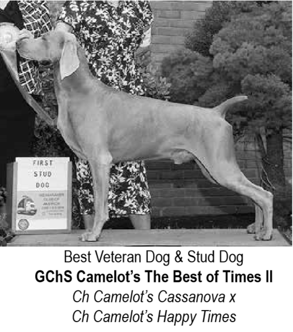 www.barrettweimaraners.com_Camelot's The Best of Times II JETHRO – WCA Undated Photo 07