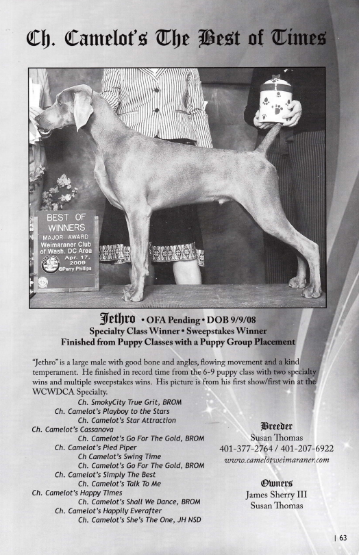 www.barrettweimaraners.com_Camelot's The Best of Times II JETHRO – WCA Undated Photo 08