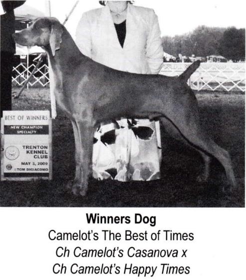 www.barrettweimaraners.com_Camelot's The Best of Times II JETHRO – WCA Winners Dog 09
