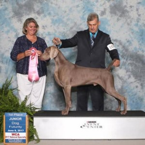 "GCH CH Silversmith I'll Have Another Vonstark JH, ""Skeeter"""