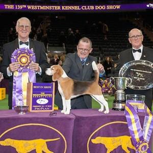 Westminster-Winners-2015-Miss-P