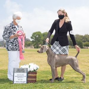 2020 Weimaraner Western Futurity and Maturity Placements