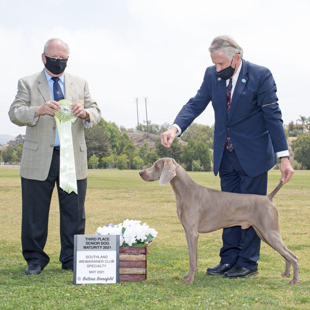 www.barrettweimaraners.com_WCA-Western_2021_Third-Place-Senior-Futurity-Dog_Obi-Wan