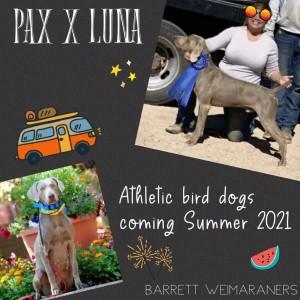 Pax x Luna Litter – Arrived August 28th