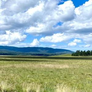 2021 White Mountains Field Trials